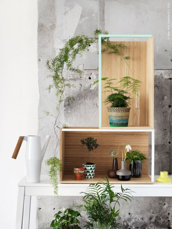 plants-in-the-home-pinterest-13
