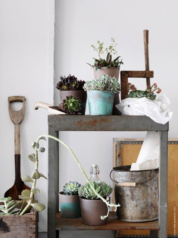plants-in-the-home-pinterest-14