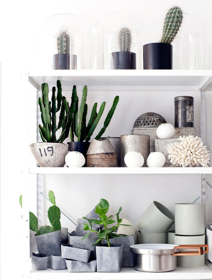 Plants In The Home On Pinterest Cate St Hill