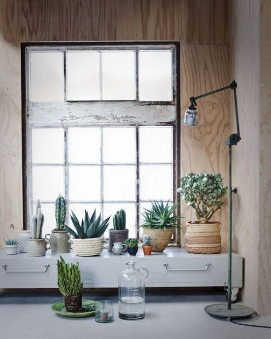 plants-in-the-home-pinterest-3