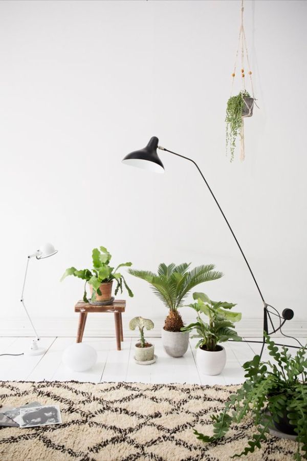 plants-in-the-home-pinterest-4