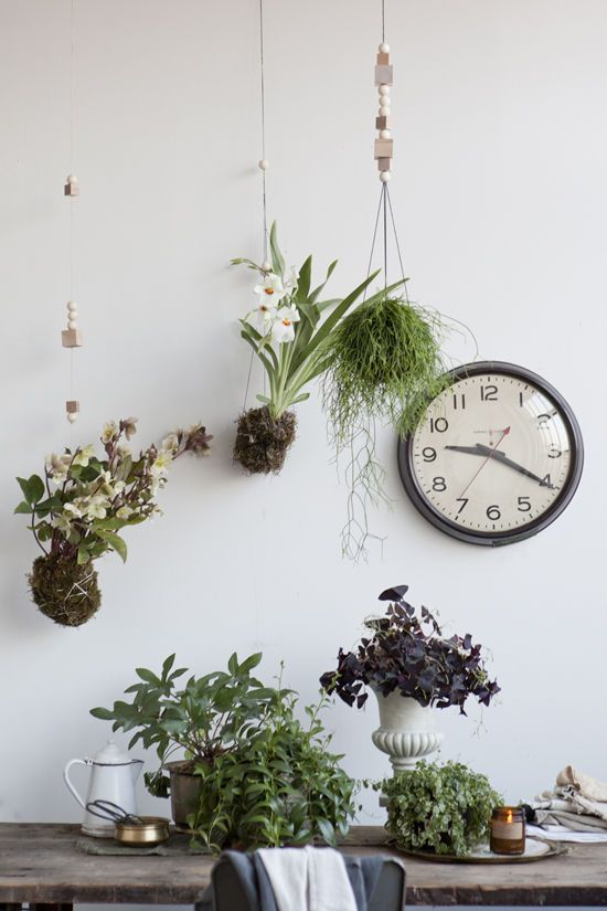plants-in-the-home-pinterest-5